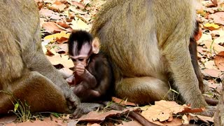 What baby monkey want and mother love baby monkey very much