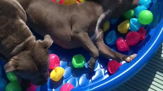 Ball pit heaven  - Video