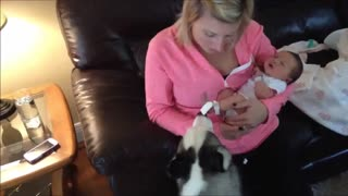 Piper the Husky meets Lily the newborn baby - Video