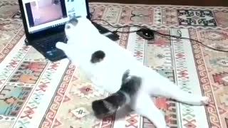 Just a Normal Cat Watching Cat Videos on Youtube