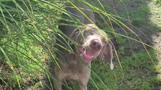 Crazy dogs chow down on leaves from plant