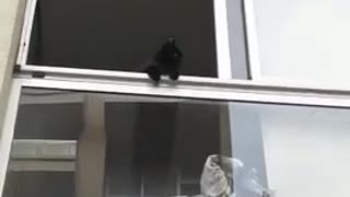 Black kitten staring down from white window - Video