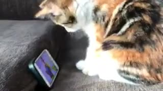 Adorable little kitten loves watching viral videos
