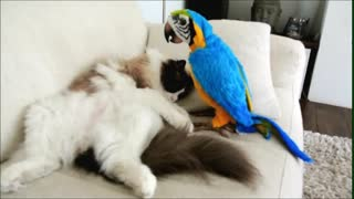 Kitty Meets Parrot For The First Time. Just Watch His Reaction!  - Video