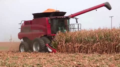 Two Case IH 6130 Combines