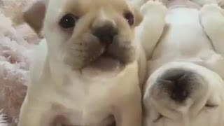 The twins dogs - Video