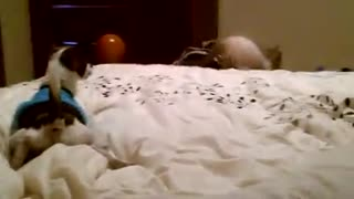 How cute! ♥ - Best friends forever! - Video