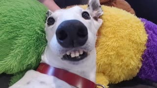 Happy Hound Can't Contain Her Excitement