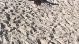 Collab copyright protection - beach race sand faceplant girl - Video