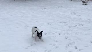Playful puppy thrilled for his first very first snow experience