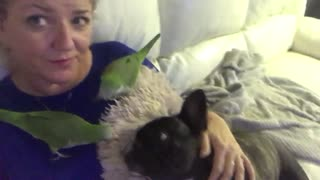 Owner snuggles up with her dogs and parrots