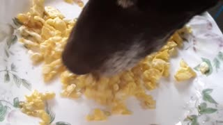 Dog enjoying breakfast