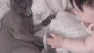 Baby and kitty share sweet playtime together