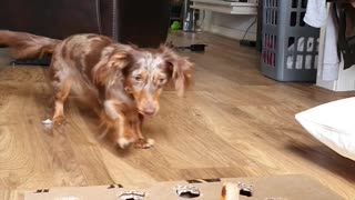 Whack-A-Mole: Dog Edition