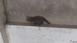 My confused kitten - Video
