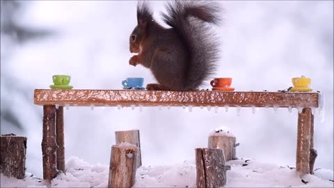 Red Squirrels celebrating Christmas