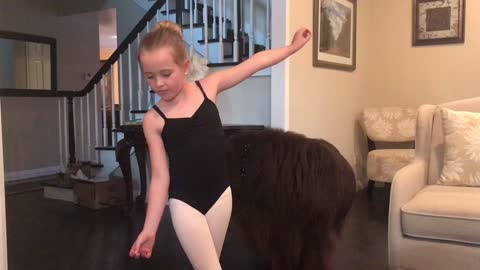 Newfoundland wants to join little girl's ballerina performance