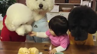 Generous Toddler Shares Meal With Her Three Hungry Pooches - Video