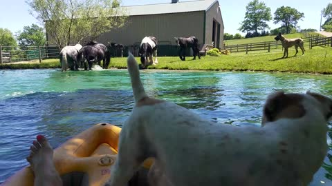 Horses splash in pond while owner and Terrier watch from kayak