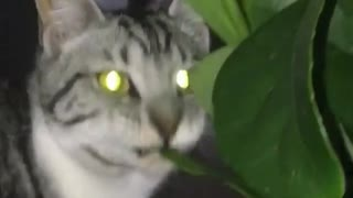 Look What this Cat is Eating - Video