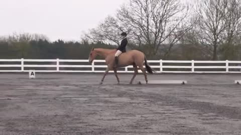 Tackless Dressage – Incredible Riding And A Great Cause!