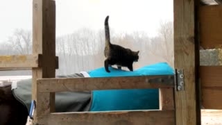 Cat Goes for a Bumpy Ride