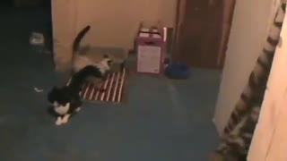 Cats and lasers go hand in hand - Video