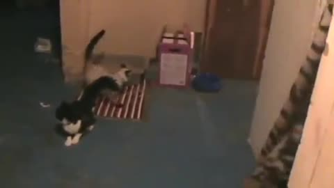 Cats and lasers go hand in hand