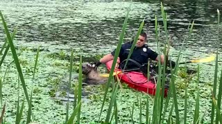Quick-thinking police officer uses kayak to save dog from drowning in muddy pond