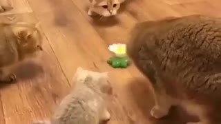 Cats Playing WIth Sting Toy