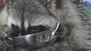Clean the dish  - Video