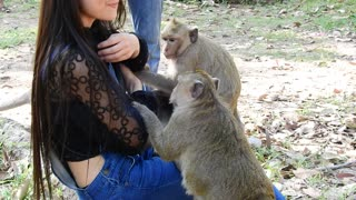 The Monkey Want To Play With Girl And She Scare - Video
