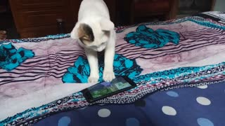 Cat Trying to Catch Fish in Phone