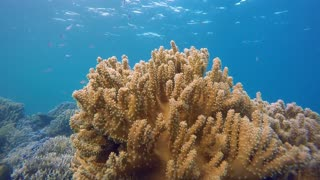 Spotted Rare Yellow Coral Ocean Underwater