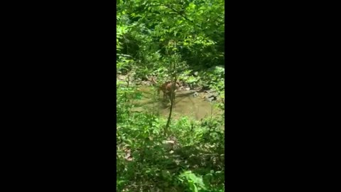 Dog becomes best friends with a playful fawn
