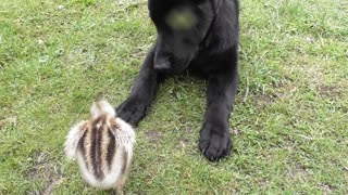 Puppy and newborn rhea become fast friends