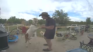 Man Dances With Goat - Video