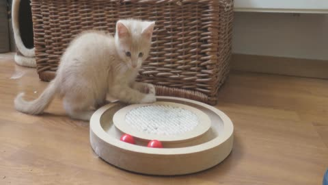 Foster kitten's very first experience in new home