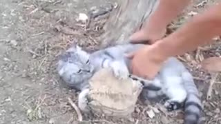 Cat Won't Let Go Of Tree Stump - Video