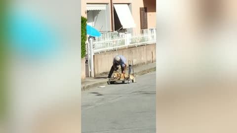 Elderly Man Takes Disabled Dog For A Walk