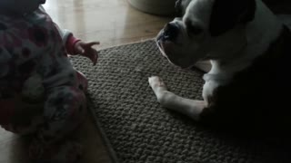Baby and dog both completely fascinated with dog bone