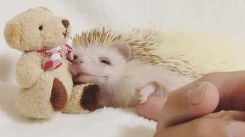 Hedgehog sleep next to bear toy on bed