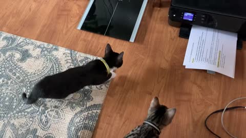 Kittens terrified and mesmerized by a printer
