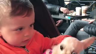 Kid shares his bottle with chihuahua puppy