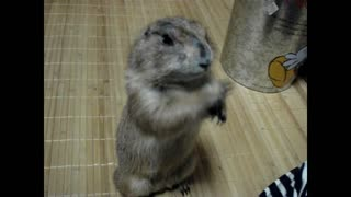 Let's scratch the gopher's cheeks