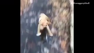 Brown dog in black harness runs towards camera slips on ice - Video