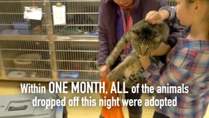 Spokanimal Shelter saves 45 animals in one night! - Video