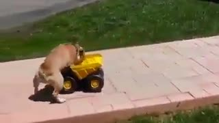 dog chauffeur - Video