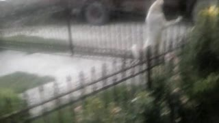 Macedonian Dog play at Home - Video