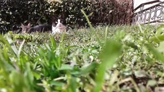 The most beautiful cats in my garden
